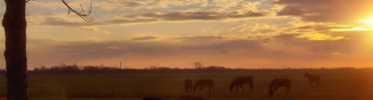 westerveld zonsondergang